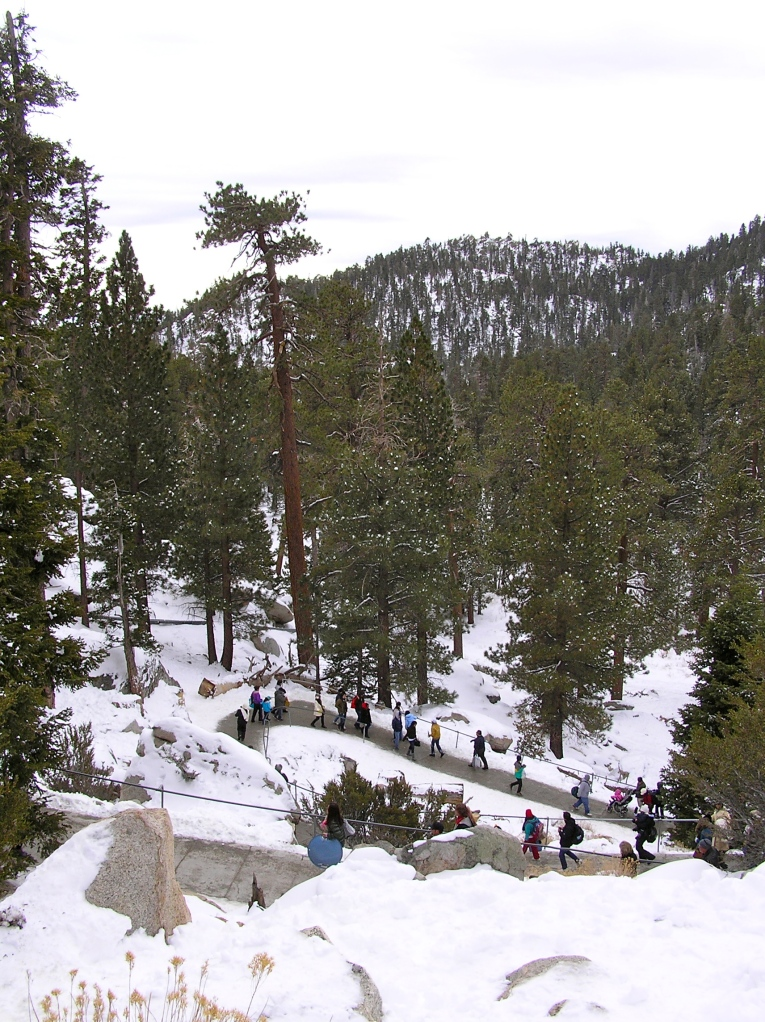 People making their way down from the lodge to the sledding hills.  The thirty degree difference in temperature means it stays cool (and snowy) on the mountain long after warmth has arrived in the desert valley below.