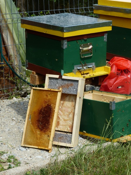 Many backyards have an apiary, an protected are where hives are kept.