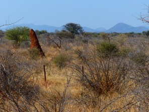 Anthill in the brush, a typical scene along the Namibian highway.